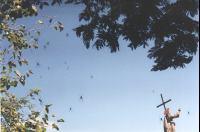 Spiderwebs at Salta
