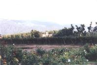 Vineyards at Cafayate